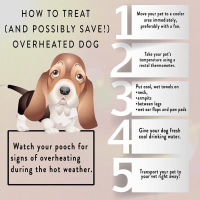 How to treat heatstroke in a dog