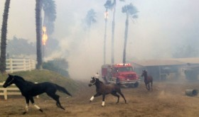 San Luis Rey Fire evacuation, from Luis Tapia video.