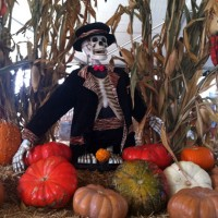 Ten Tips to Help Keep Your Kids Safe This Halloween